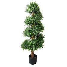 romano 4 ft boxwood spiral tree 50 10010 r the home depot