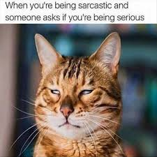 Sarcastic Cat Meme - when youre being sarcastic cat