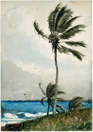 winslow homer palm tree nassau the met