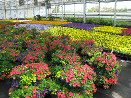 home rcop clesen s ornamental plants