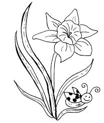 butterfly and daffodil flower coloring page flower coloring