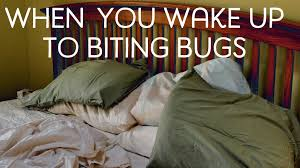Why Do Bed Bugs Come Out At Night Are You Being Eaten By Invisible Bugs Dengarden