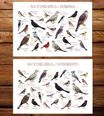 midwest state backyard birds art print features local pride