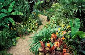 Low Light Outdoor Plants 14 Tropical Flowers You Can Grow Almost Anywhere