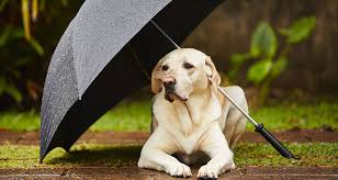 Can You Bury A Dog In Your Backyard Weathering The Storm Cesar U0027s Way