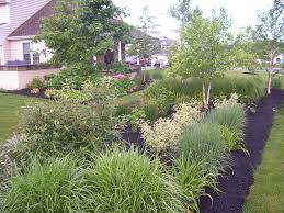 native plants landscaping 5 reasons to add native plants to your landscape river valley