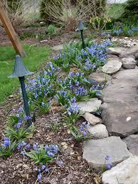 a flower bulb for every spot u2022 greenview fertilizer