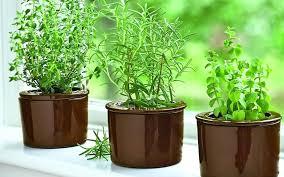 grow an herb garden indoors u2013 exhort me