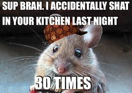 Mouse Memes - scumbag mouse daily picks and flicks