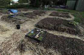 Vegetable Beds Garden Tip It U0027s Time To Clean Up Your Vegetable Beds
