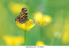 closeup butterfly side view stock photos closeup butterfly side