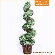 boxwood topiary spiral tree we found limited
