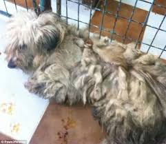 thousands abused dogs rescued romania uk u0027s paws2rescue