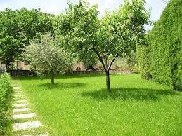 albero giardino alberi da ombra alberi scegliere gli alberi da ombra