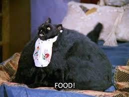 Fat Cat Heavy Breathing Meme - fat cat food food
