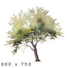 watercolor trees sweet nature watercolor tree sketch pen and
