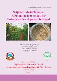 srijana hybrid tomato a potential technology for enterprise