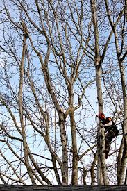 vancouver wa tree pruning cascade tree works llc