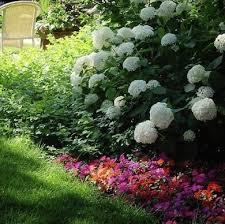 no sun plants shade plants 10 plants that don t need sun bob vila