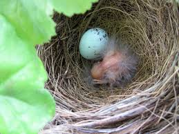the backyard birder stop tree trimming until nesting season ends