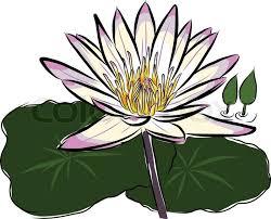lotus flower sketch vector stock vector colourbox