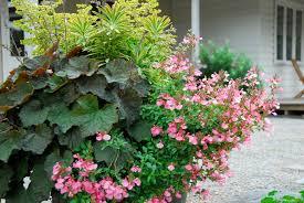 foliage vs flower winter michael mccoy