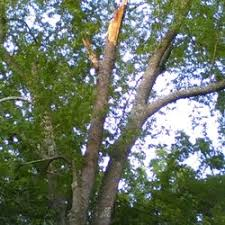 ls that look like trees danny s tree service 33 photos tree services 3730 clarksville