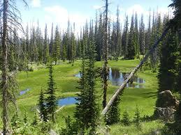 Utah forest images Free photo evergreen uinta swamp utah mountains forest max pixel jpg