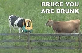 You Re Drunk Meme - the very best of the you are drunk meme