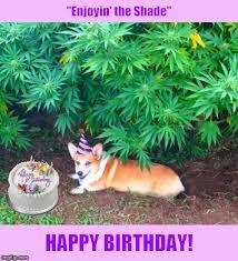 Corgi Birthday Meme - a birthday card with a cannabis loving corgi imgflip