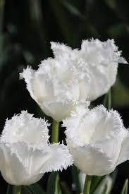 white honeymoon brent and becky s bulbs