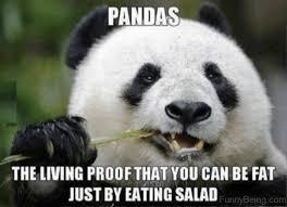 Funny Panda Memes - 84 stupid panda memes