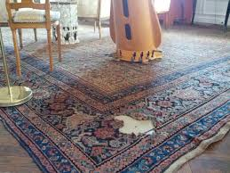 Persian Rug Cleaning by Puregreen Carpet Cleaning Persian Rug Dry Rotted Big Plants