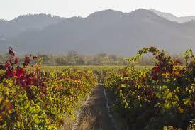 vineyard vineyard galleries vineyards wine trentadue