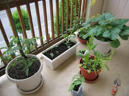 indoor garden descriptions photos advices videos home