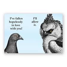 mincing mockingbird guide to troubled birds hopelessly in love magnet u2013 the mincing mockingbird u0026 the frantic