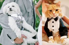 how to include your pets in your wedding guides for brides