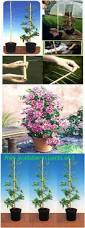 Climbing Plant Supports - climbing plants direct