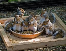 How To Hunt Squirrels In Your Backyard by Squirrels And Chipmunks Paws