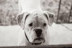 senior dog says goodbye to his beloved owner in heartbreaking