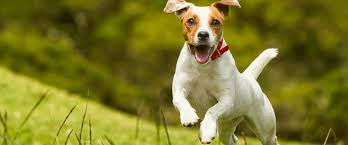 science diet light calories top 4 high calorie dog food that add weight to your dog fast