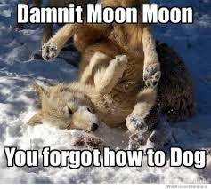 3 Wolf Moon Meme - 45 very funny wolf meme pictures that will make you laugh