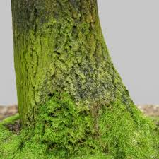 tree roots covered in moss 3d asset cgtrader