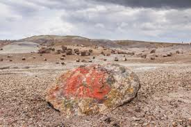 Arizona travel log images Things to do in petrified forest national park travel jpg