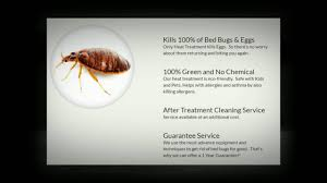 What Kills Bed Bugs For Good Bed Bug Removal Calgary We Clean Bed Bugs 403 388 1525 Youtube