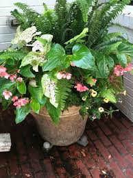 373 best container gardening images on pinterest pots flowers