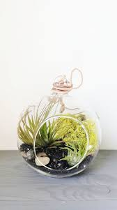 29 best terrarium love images on pinterest terrariums