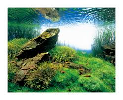 Aquascape Canada Miyabi Aqua Design Nature Aquariums And Aquascapes