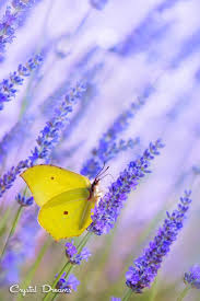 best 20 yellow butterfly tattoo ideas on pinterest monarch