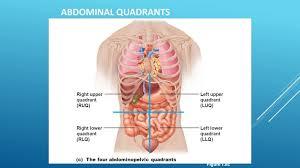 Directional Terms Human Anatomy Left Upper Quadrant Anatomy Human Anatomy Library